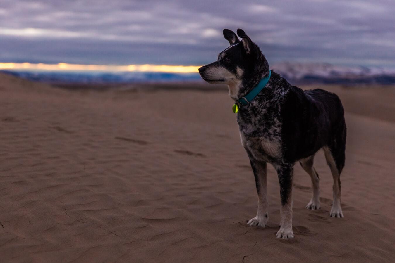 Dog Collar Training