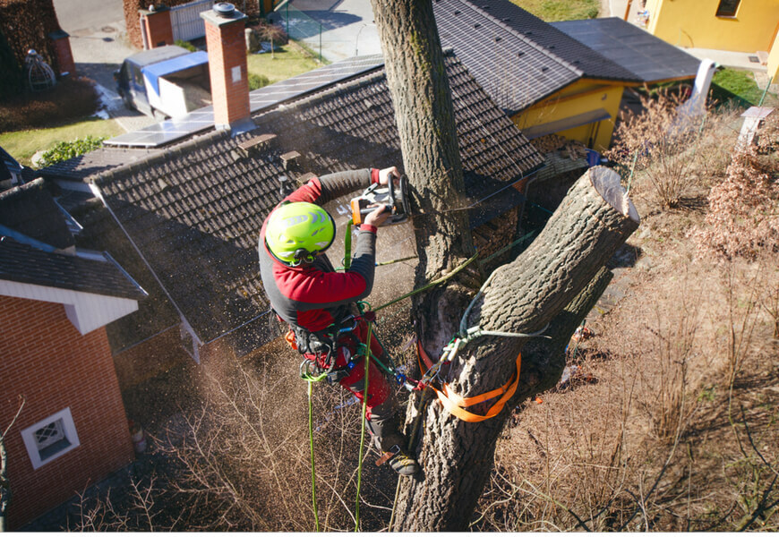 Tree Removal Niagara Falls Announces Expansion of Services to Entire Niagara Region