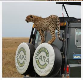 Tanzania Tourism - Safari with Zara Tours
