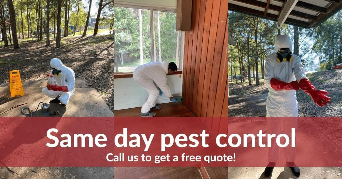 True Pest Control Melbourne