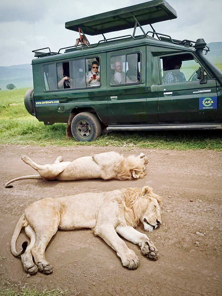 Tanzania Tours for A Wide Range of Capabilities